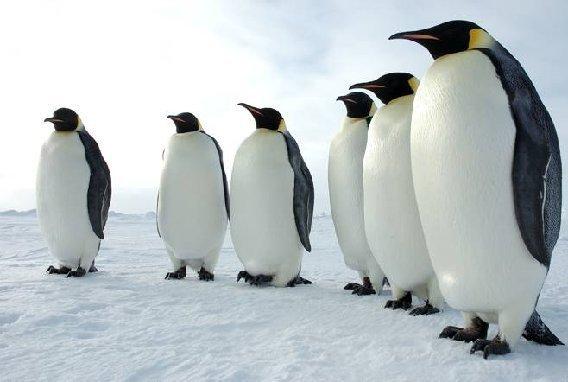 20130521_Dead Penguins