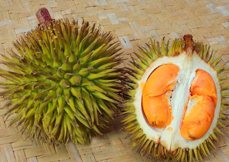 20131002_Colorful Durian in Malaysia_003