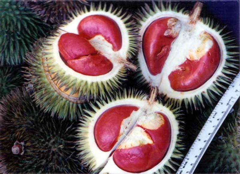 20131002_Colorful Durian in Malaysia_004