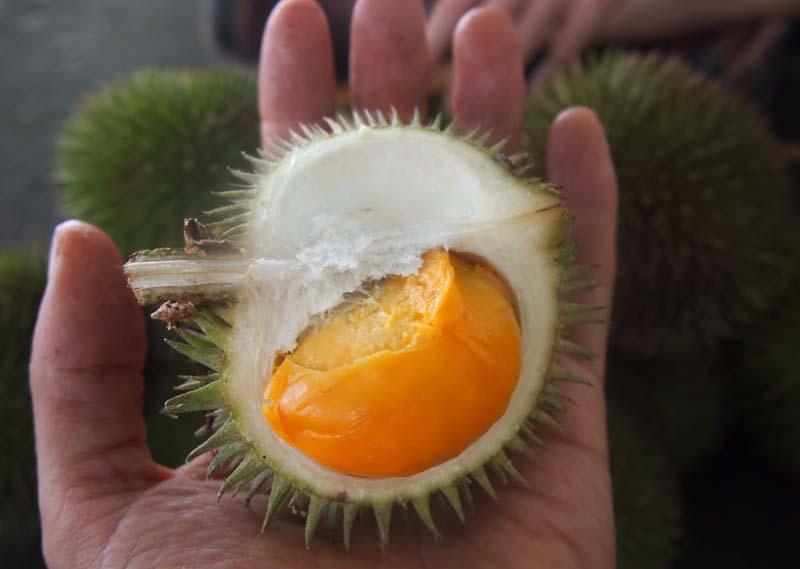 20131002_Colorful Durian in Malaysia_008